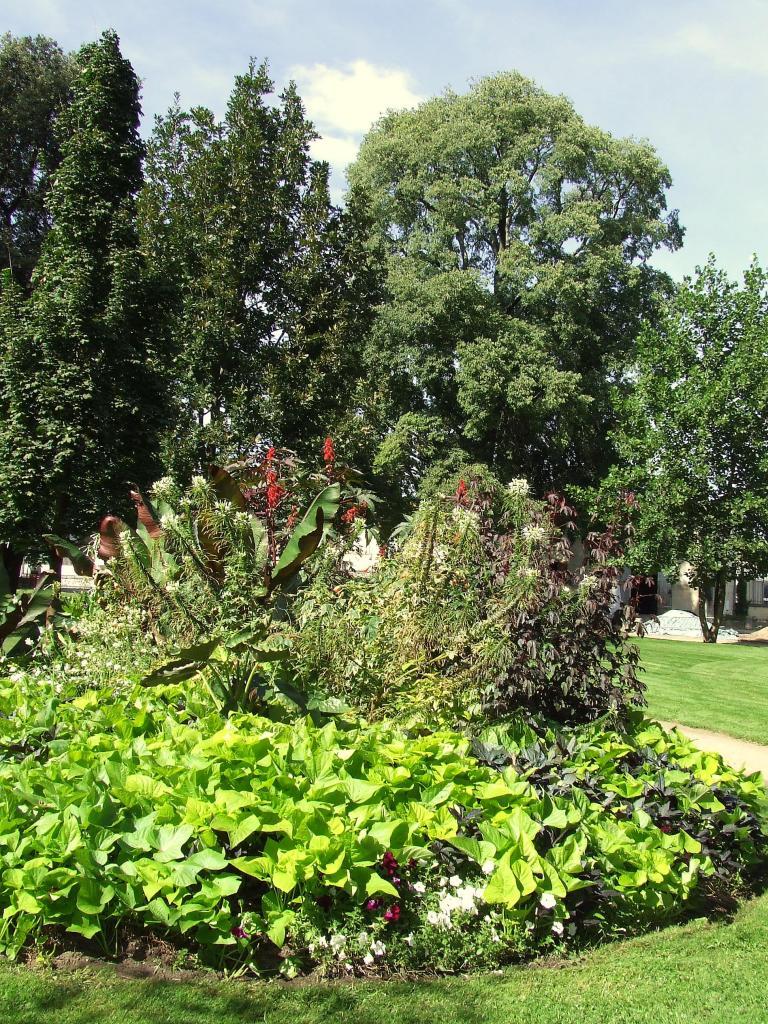 arbres au square
