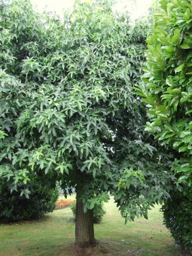 des arbres à Arveyres