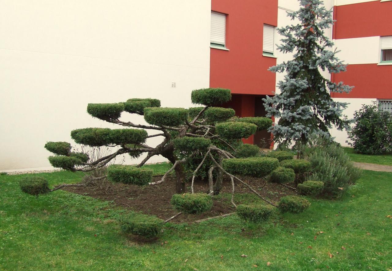 arbre extraordinaire
