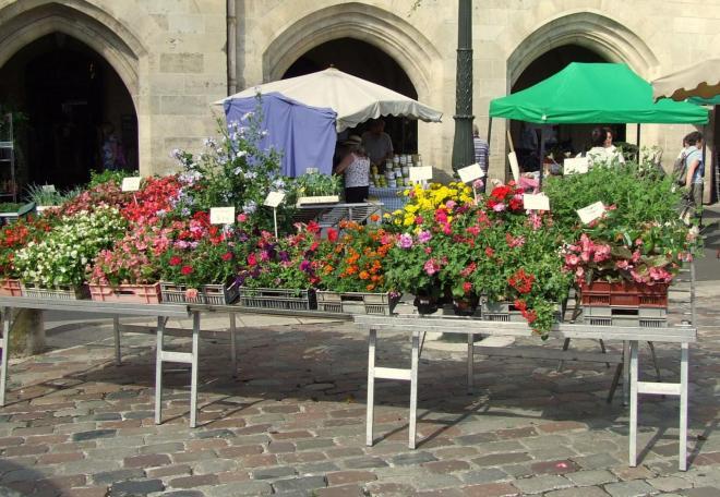 commerce de fleurs et de plants
