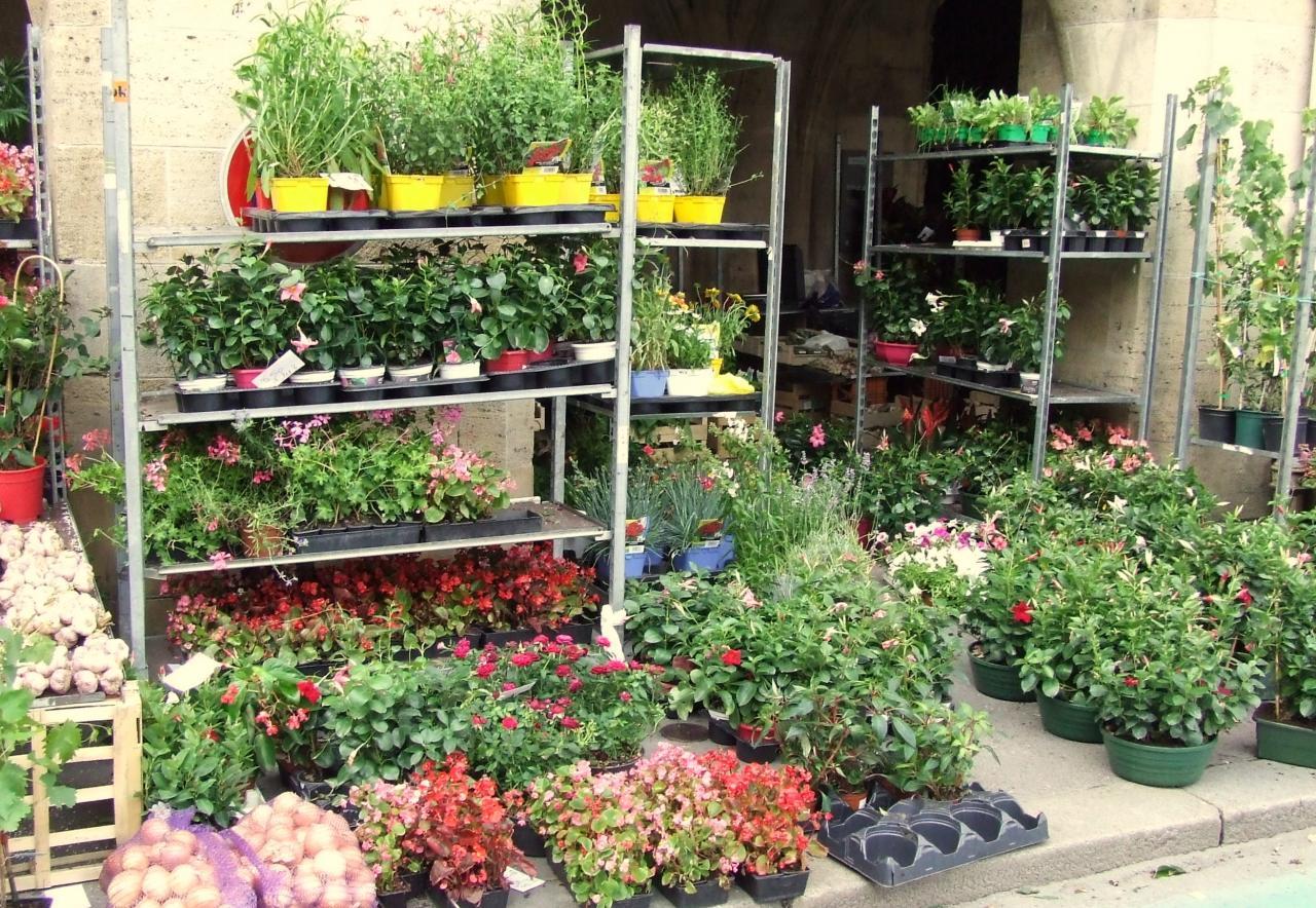 chez Guérin, des plants